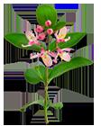 Цветок жимолости